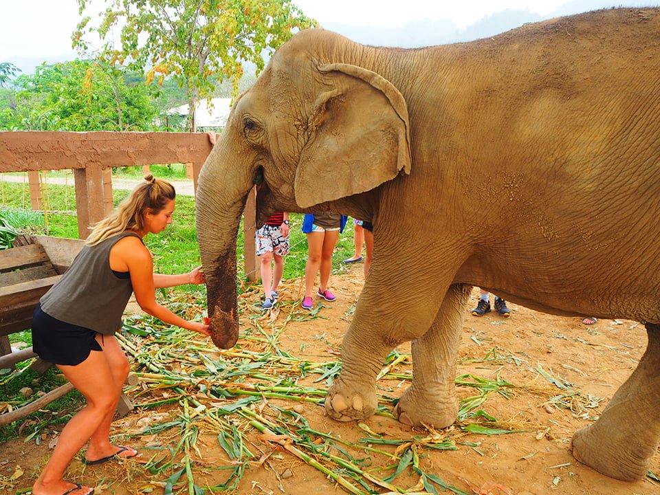 Słonie uwielbiaaaaają arbuzy…