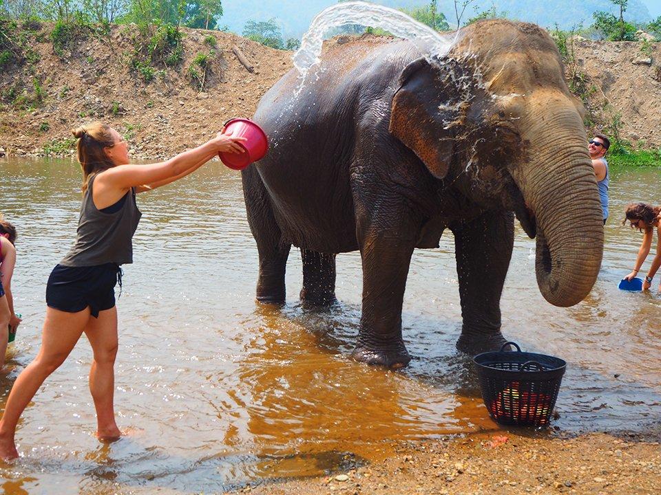 Ups, prosto w oko... Przepraszam Panie słoniu!