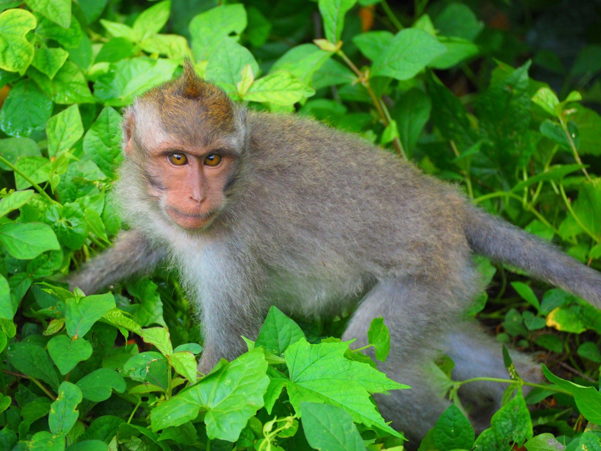Monkey Forest na Bali