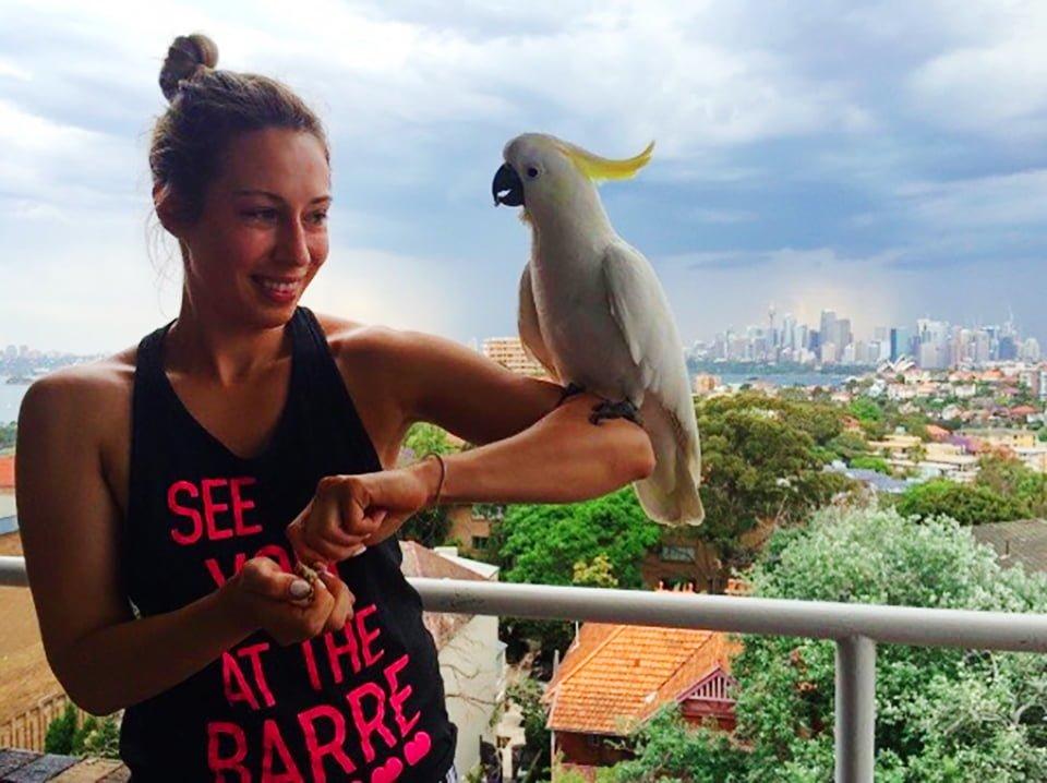 Szalone papugi w Australii