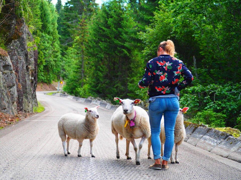 Jak spędzić aktywny dzień w okolicy Oslo?