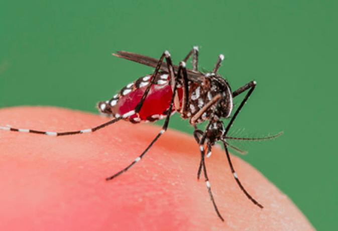 Jak prawie umarłam na dengę w Tajlandii