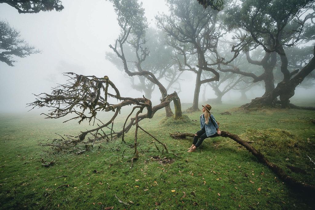 Magiczny las Fanal na Maderze  - daj się pochłonąć wszechobecnej mgle