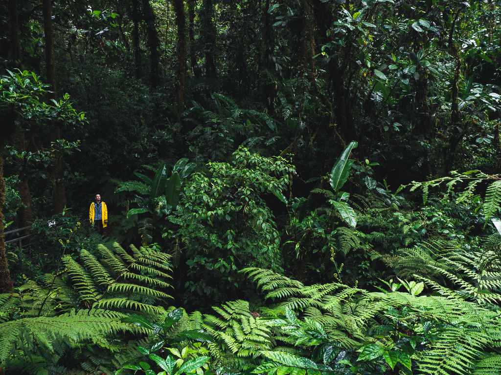 The Santa Elena Cloud Forest in Costa Rica - how to  have a truly remarkable experience close to the nature